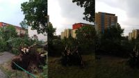 Drzewa wyrwane z korzeniami na Kapuściskach (nadesłane)