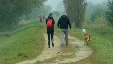 Azorkowy spacer na sześć łap. Jak pomóc psom ze schroniska?