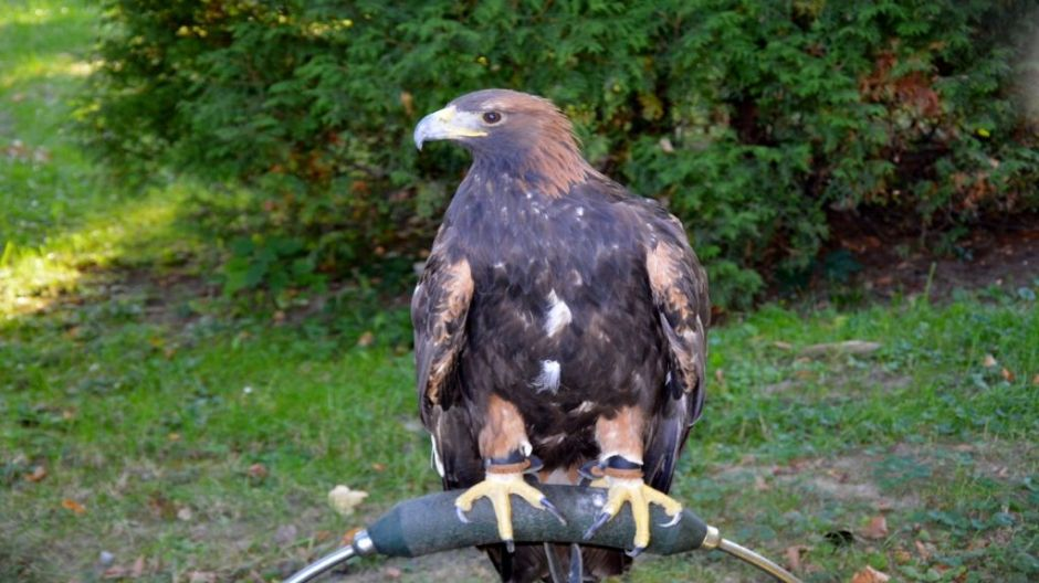 fot.http://www.piotrkow.pl