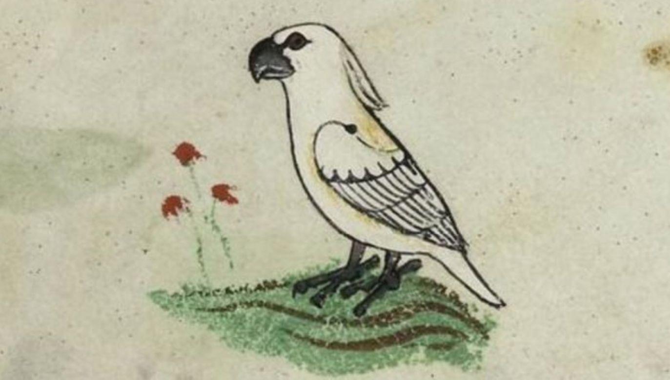 Cesarz Fryderyk II przez 30 lat tworzył swój traktat o sokolnictwie, w którym opisał ponad 300 gatunków ptaków (fot. BIBLIOTECA APOSTOLICA VATICANA)