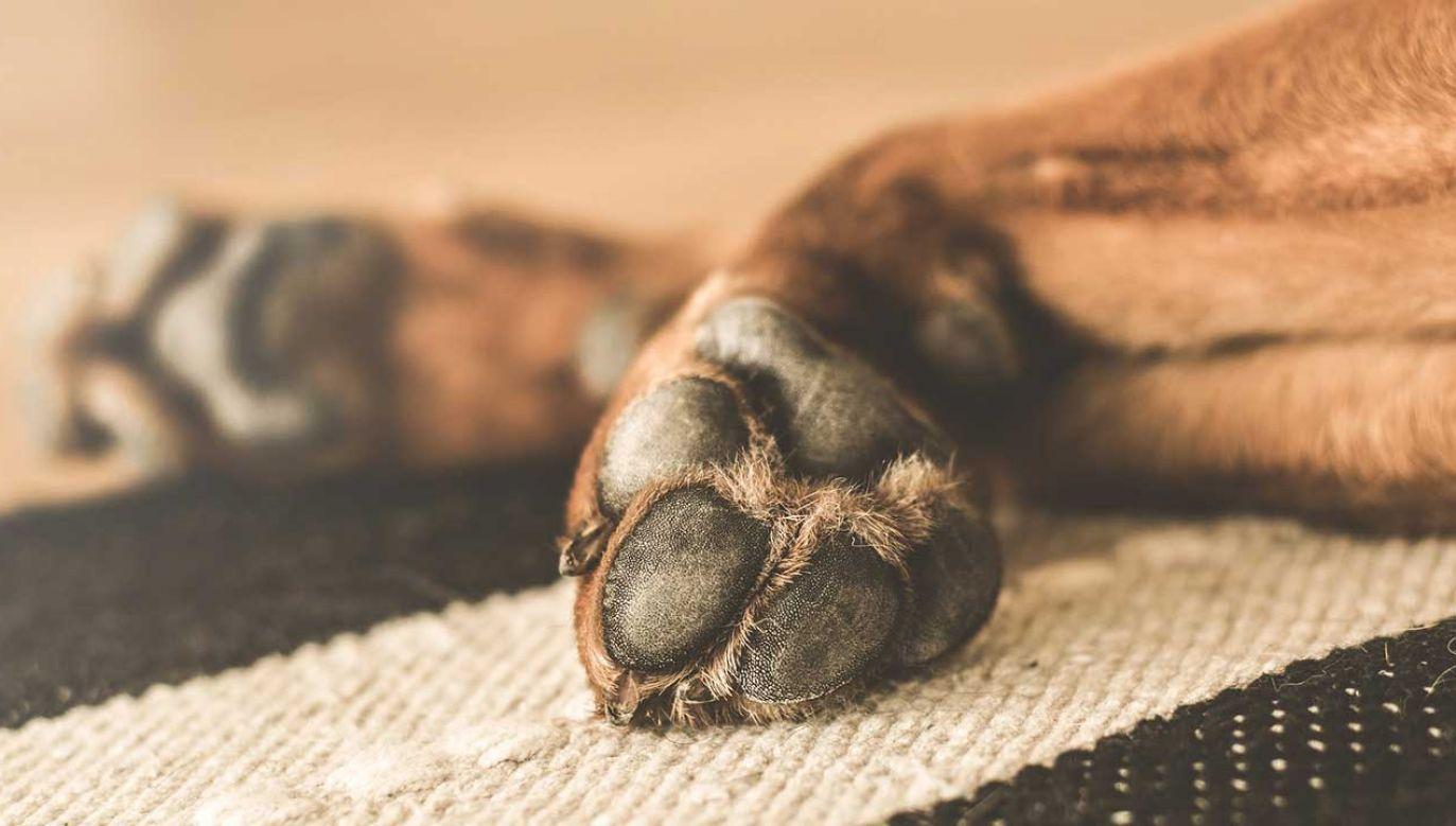 Policja poszukuje sprawcy zabójstwa psa (fot. Pixabay/LUM3N)
