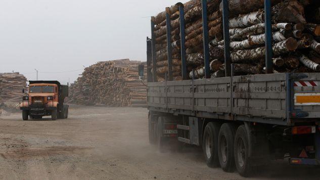 Ukraina mimo obietnic nie odblokowała zakazu eksportu drewna (fot. REUTERS/Valentyn Ogirenko)