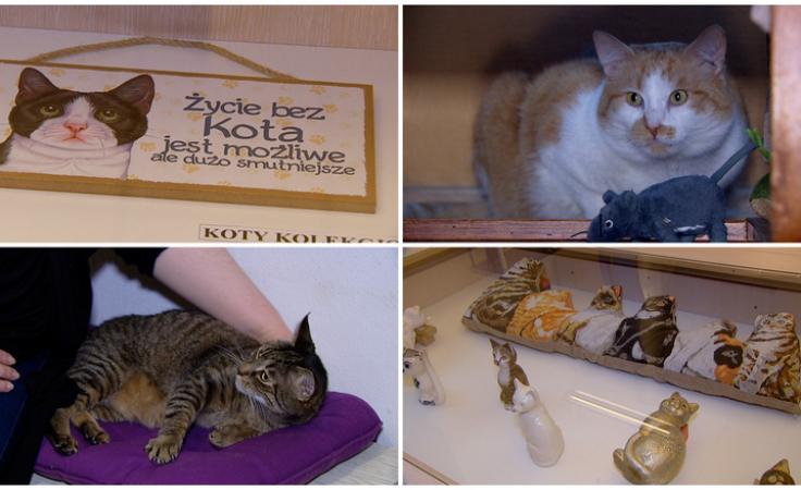 Kilkadziesiąt kotów w bibliotece. Światowe święto mruczków