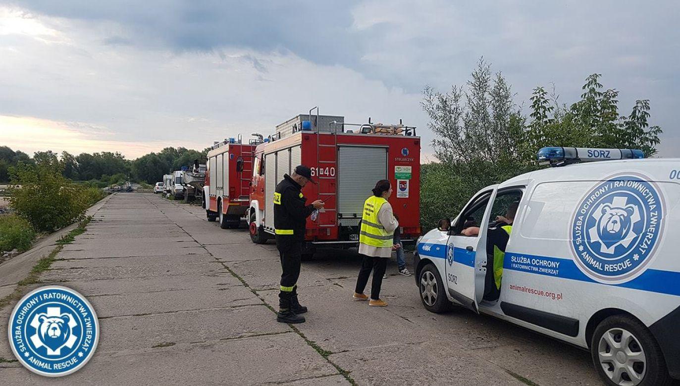 W poszukiwania zwierzęcia włączyła się Straż Pożarna (fot. fb/Animal Rescue Polska)