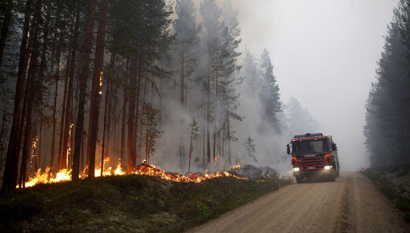 Pożary są efektem fali upałów w Skandynawii (fot. PAP/EPA/Mats Andersson)