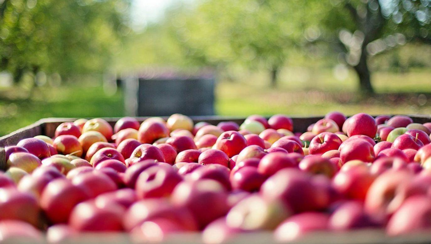 Polskie rolnictwo zmaga się z wieloma problemami (fot. Pixabay/jill111)