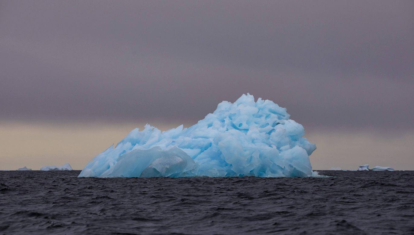 Naukowcy twierdzą, że w rejonie Arktyki jest znaczna bioróżnorodność gatunkowa (fot. arch. PAP/AA/ABACA)