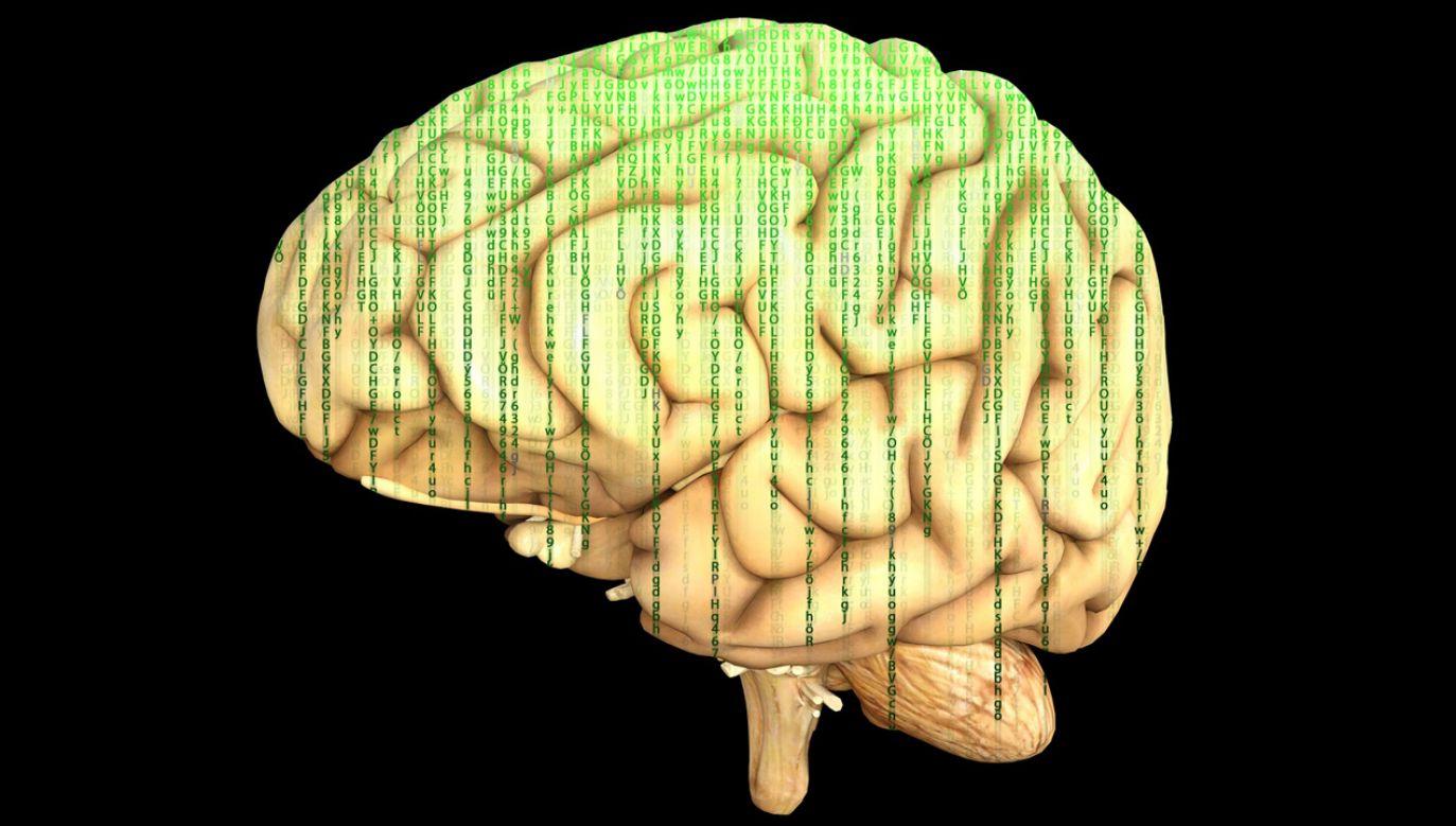 Dokładne mapy mózgu, to aktualne od wielu lat marzenie neurobiologów  (fot. pixabay/TheDigitalArtist)