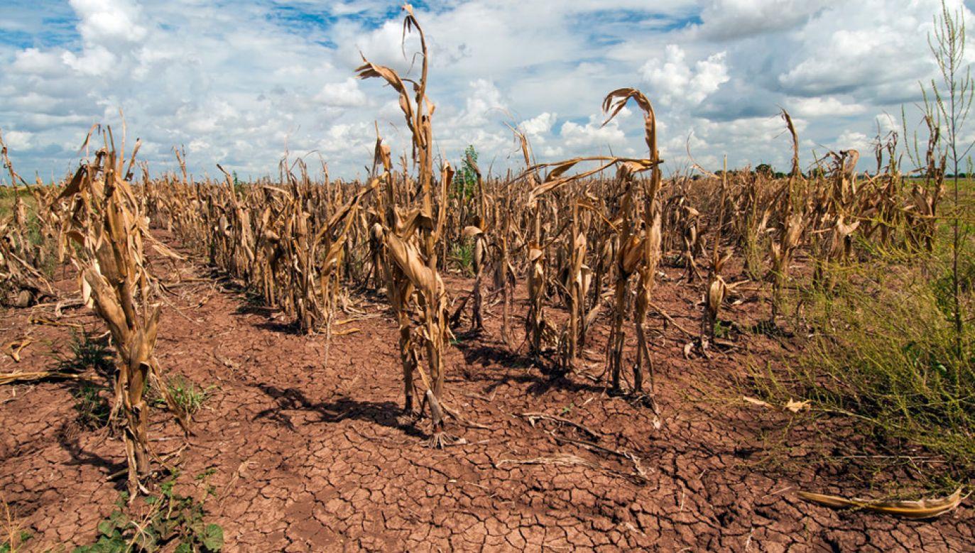 Problem suszy dotyczy już całego kraju (fot. Flickr/USDA)