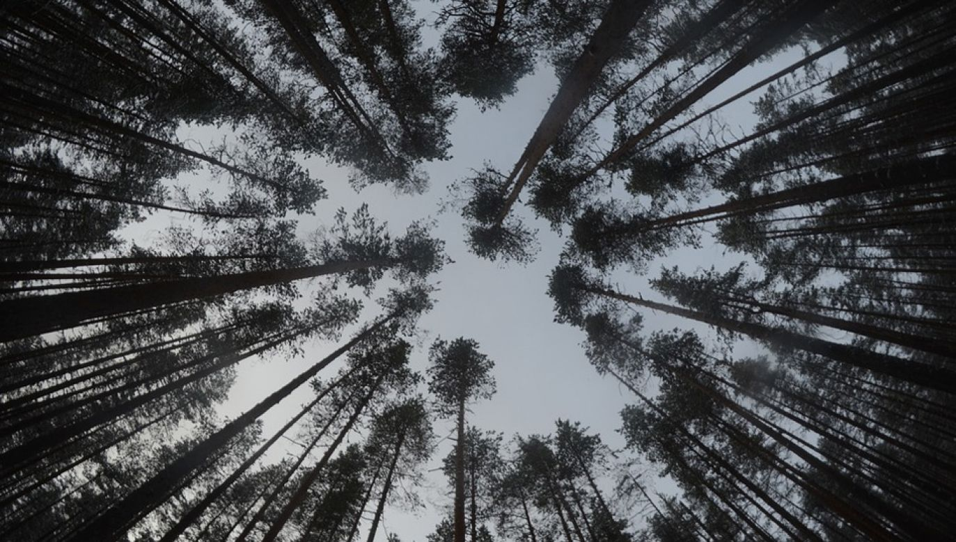 Na zwłoki Krystyny Ch. natrafiono podczas wycinki drzew (fot. Pixabay/jannenfotot)
