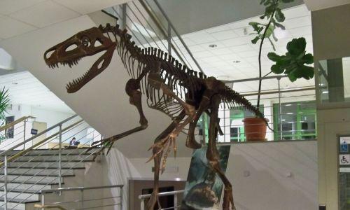 Rekonstrukcja szkieletu Smoka wawelskiego, stojąca w holu Wydziału Biologii UW. Fot. Wikimedia Commons/Panek - CC BY-SA 4.0