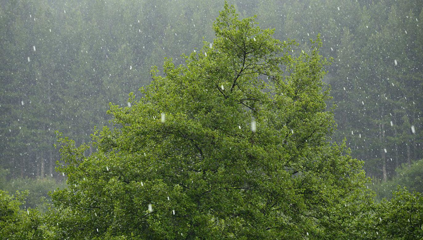 Instytut Meteorologii i Gospodarki Wodnej wydał ostrzeżenia pierwszego stopnia przed upałami i burzami z gradem (fot. Shutterstock/iVangelos)