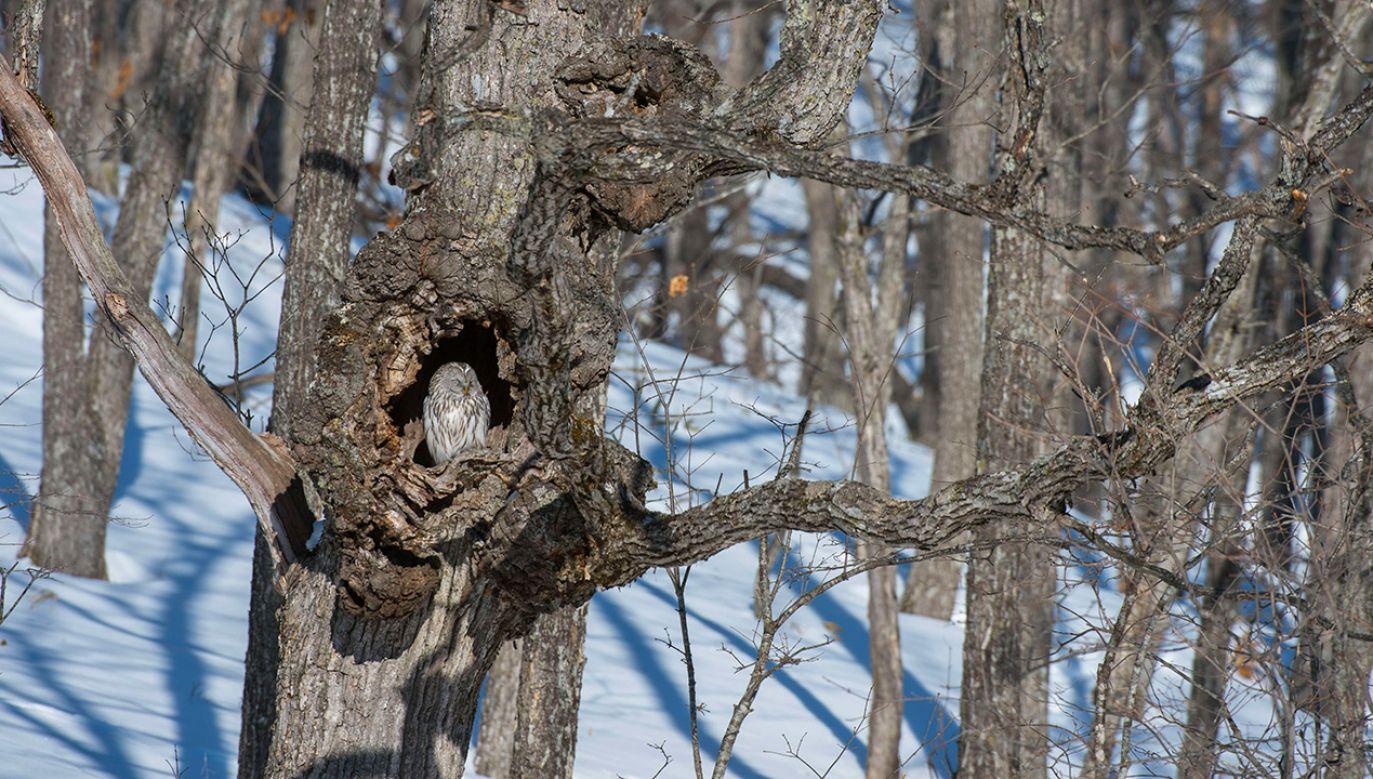 """""""Wszystko wskazuje na to, że las stał się mniej odpowiednim środowiskiem dla kilku gatunków ptaków, mimo statusu chronionego"""" (fot. Wolfgang Kaehler/LightRocket/Getty Images)"""