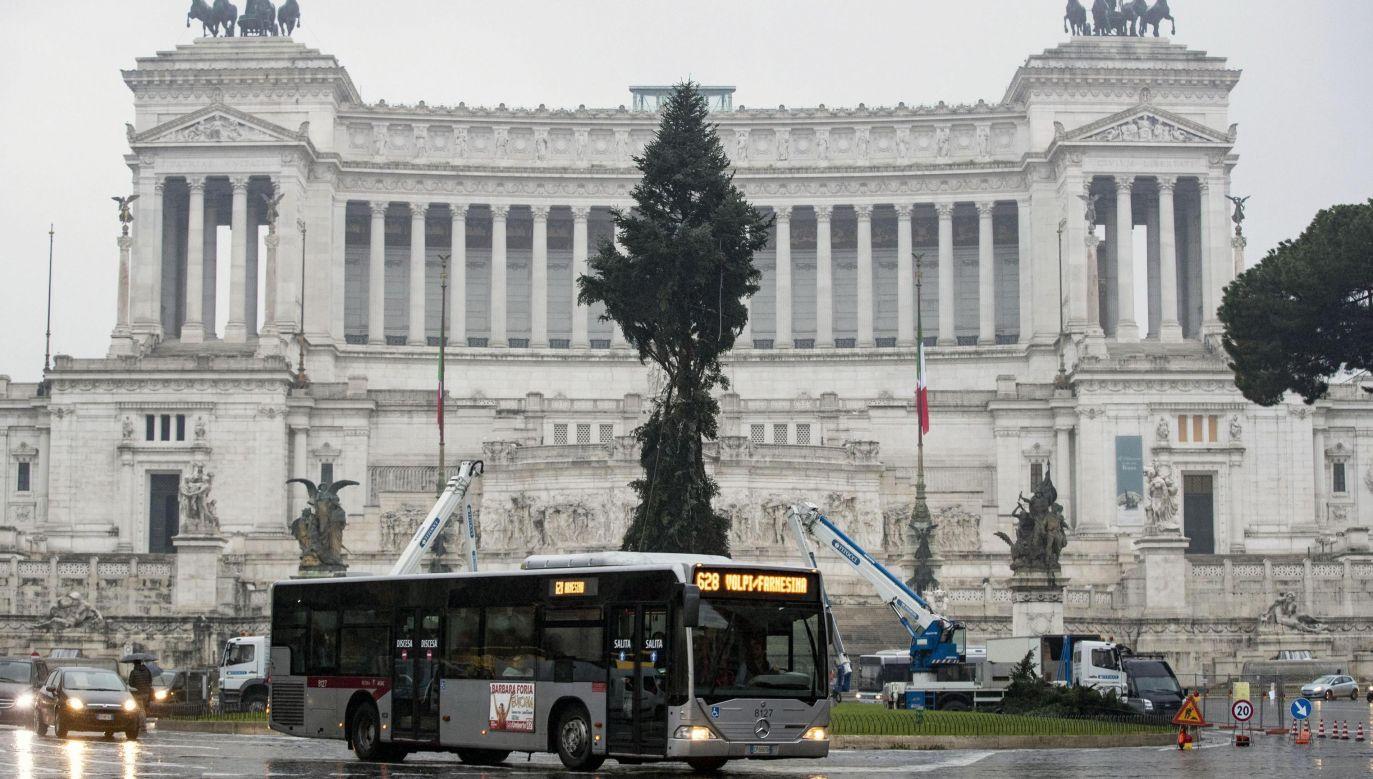 """Drzewko nazwano """"połamańcem"""", co jest nawiązaniem do słowa wymyślonego przed rokiem przez jednego z dziennikarzy (fot. PAP/EPA/Massimo Percossi)"""