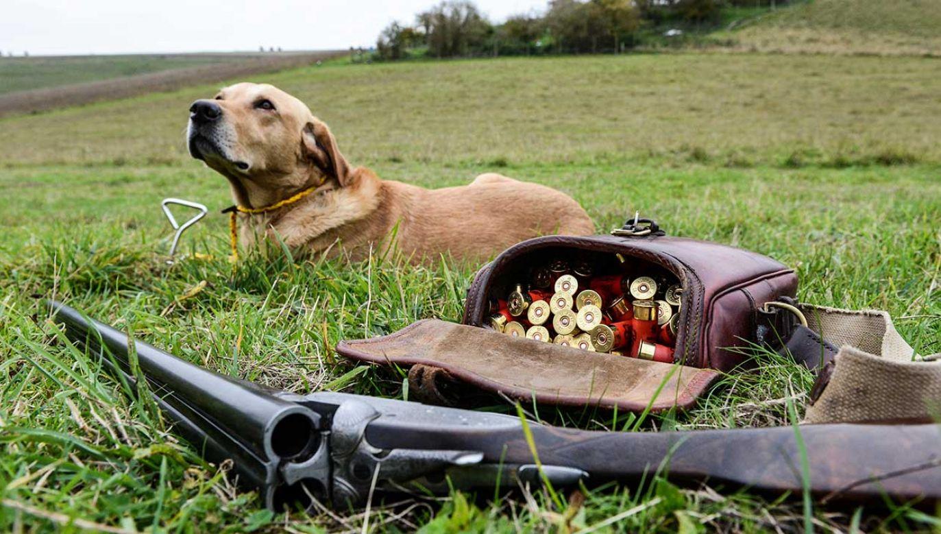 Psu udało się ściągnąć jezyk spustowy broni, która leżała naładowana i odbezpieczona w samochodzie meżczyzny (fot. Chris Ratcliffe/Getty Images)
