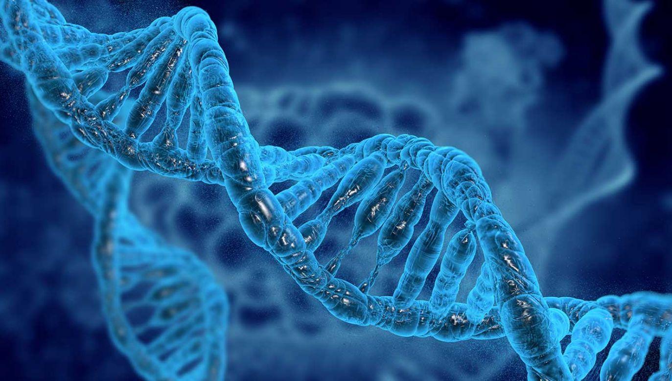 Chińskiemu genetykowi He Jiankui udało się zmodyfikować DNA ludzkich zarodków. Uzyskał w ten sposób co najmniej dwie donoszone ciąże. (fot. Shutterstock/vitstudio)