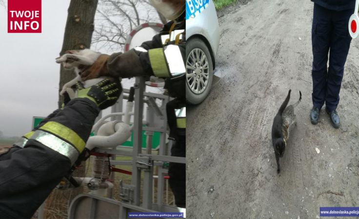 Kocięta wraz z mamą utknęły na 10 metrowym drzewie (fot. dolnośląskapolicja.gov.pl)