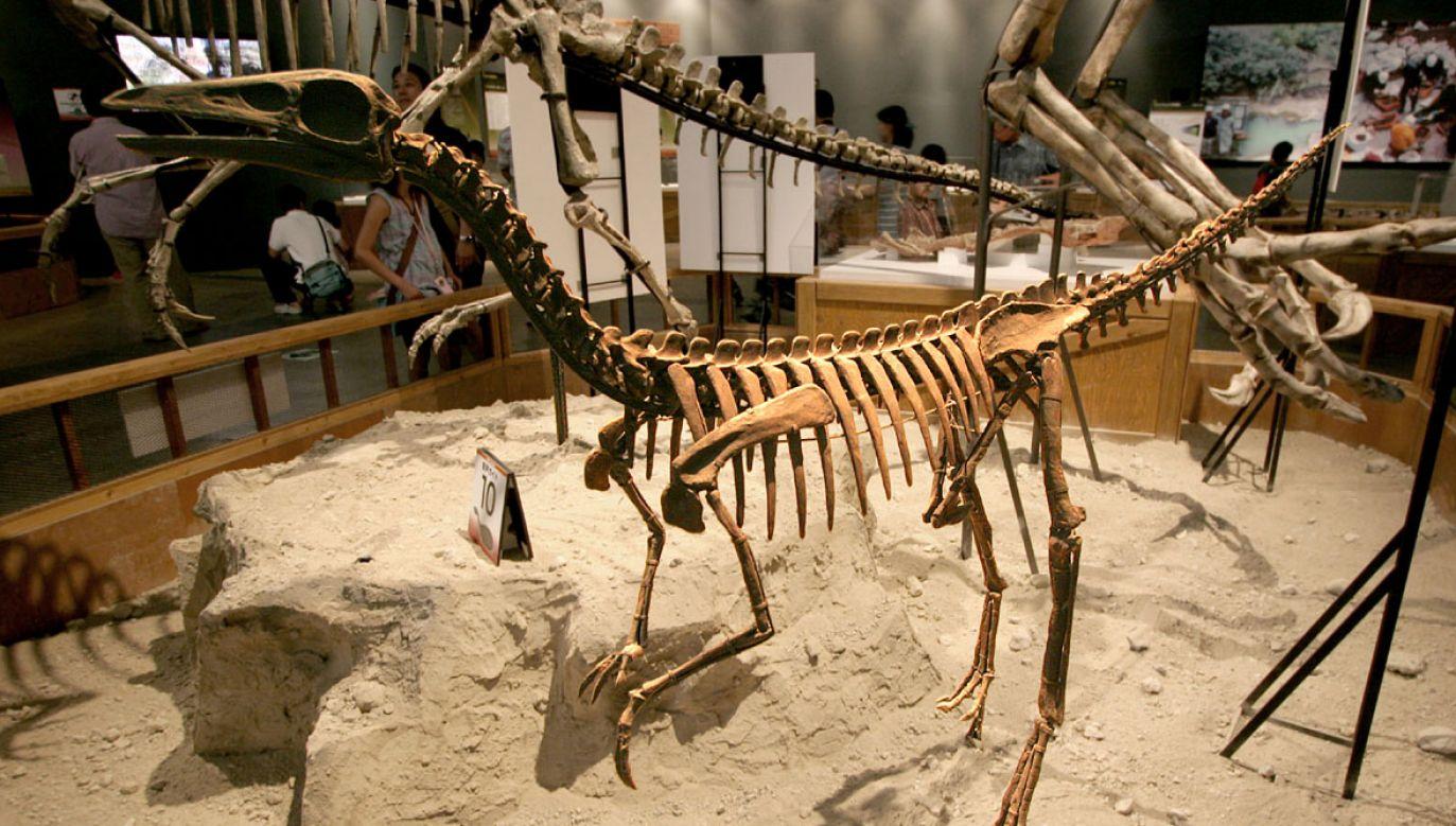 """Okazuje się, że dinozaury były zasadniczo wyposażone w organ, który dziś nazwalibyśmy """"ptasimi płucami"""" (fot. flickr.com/Kabacchi)"""
