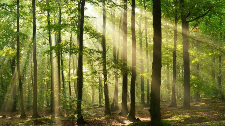 Babcia z wnuczką zgubiły się w lesie w Łabiszynie