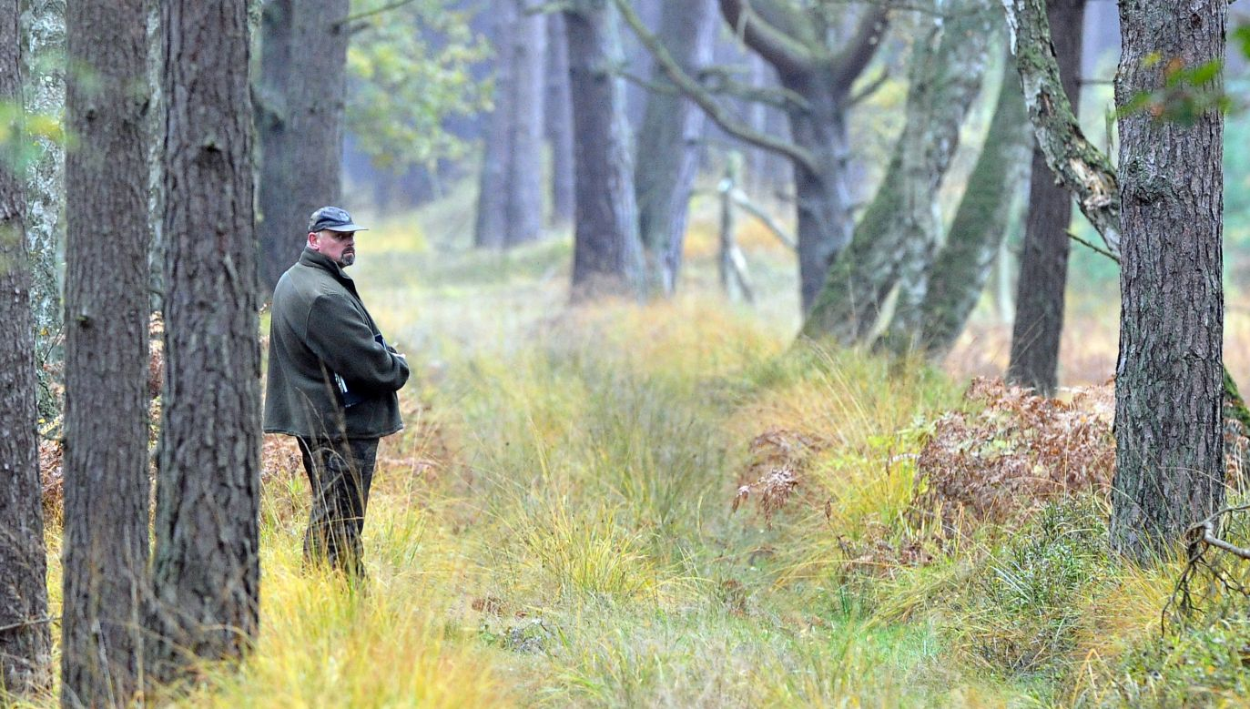 Leśnicy z Elbląga rozstawili już zapory zapachowe i proszą, by ich nie dotykać (fot. arch. PAP/Marcin Bielecki)