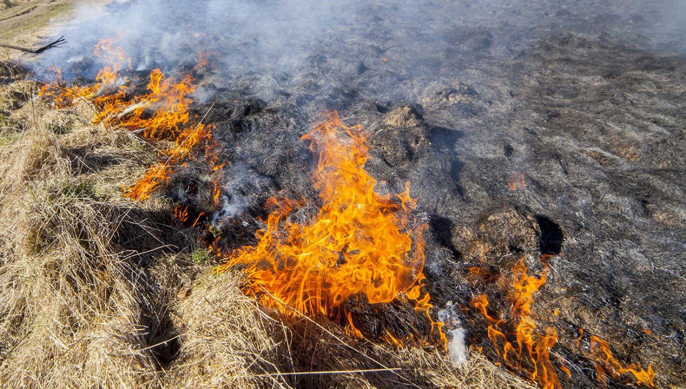 Policja ustala sprawcę podpalenia łąk (fot. arch.PAP/Michał Walczak)