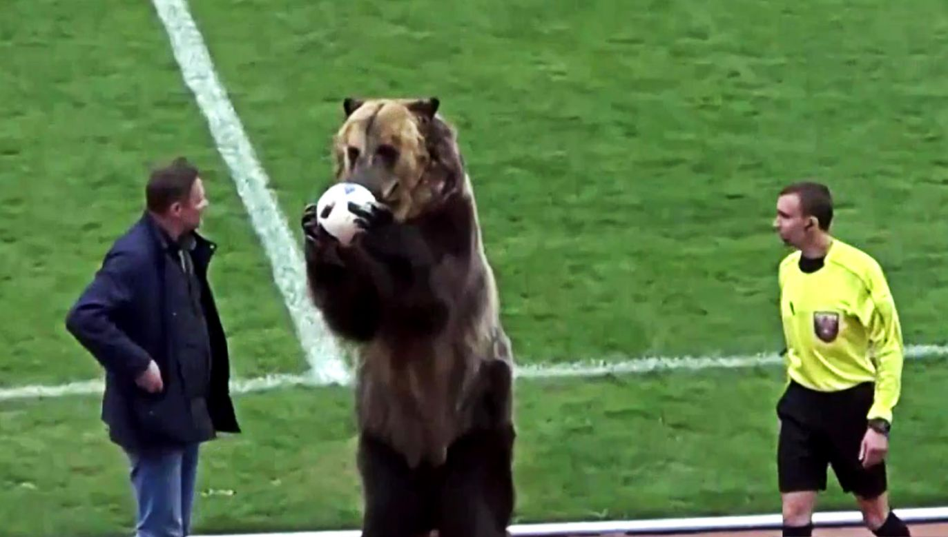 Niedźwiedź na rosyjskim boisku (fot. TVP info)