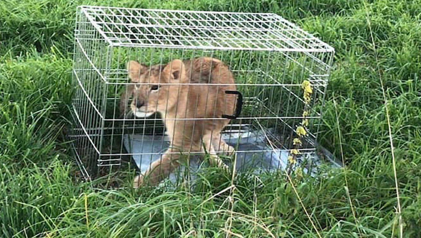 Zdaniem weterynarza, zwierzę ma około 4 miesiące (fot. FB/Politie Stichtse Vecht)