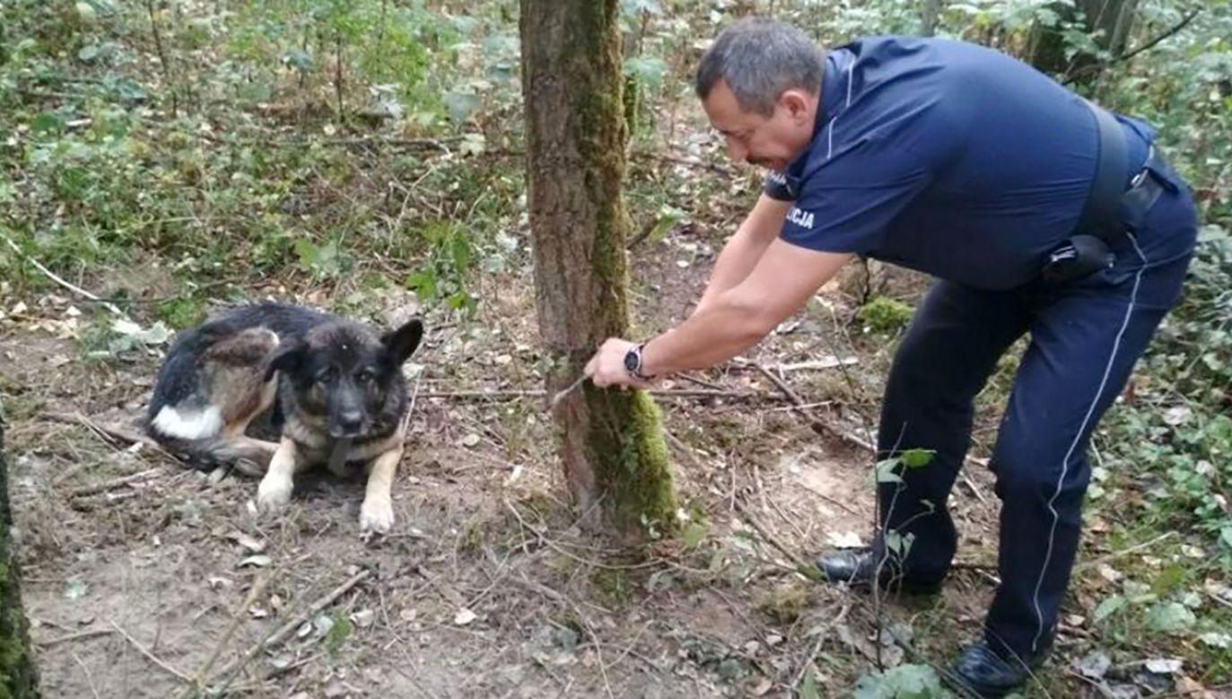 Uwolnione zwierzę natychmiast rzuciło się do ucieczki (fot. mazowiecka.policja.gov.pl)