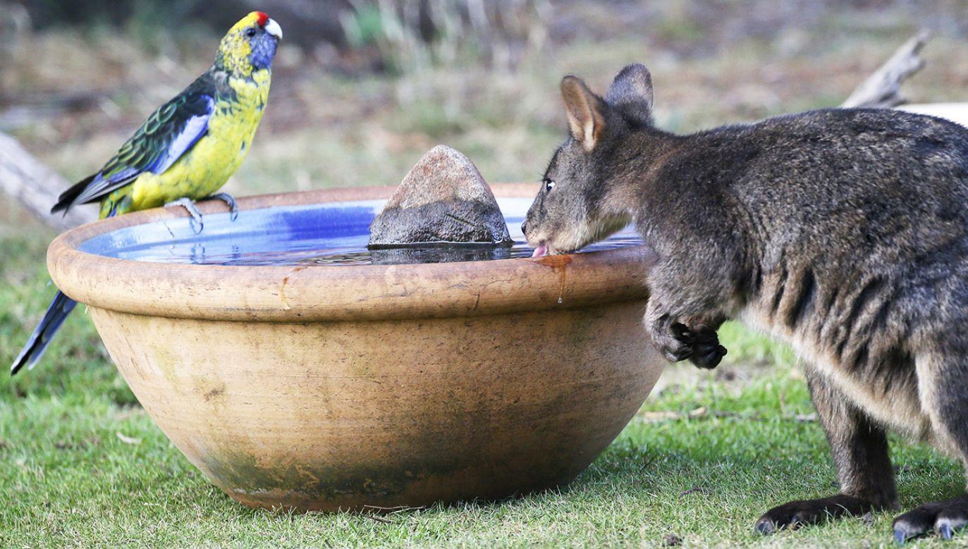 Upały są dotkliwe także dla zwierząt (fot. PAP/EPA)