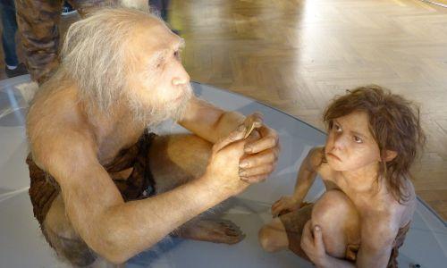 Muzeum Historii Naturalnej w Wiedniu. Rekonstrukcja tkanki miękkiej męskiego homo neanderthalensis (La-Chapelle-aux-Saints 1, Francja) z dzieckiem (Gibraltar 2, Devil's Tower, UK). Fot. Wikimedia/Wolfgang Sauber, CC BY-SA 4.0