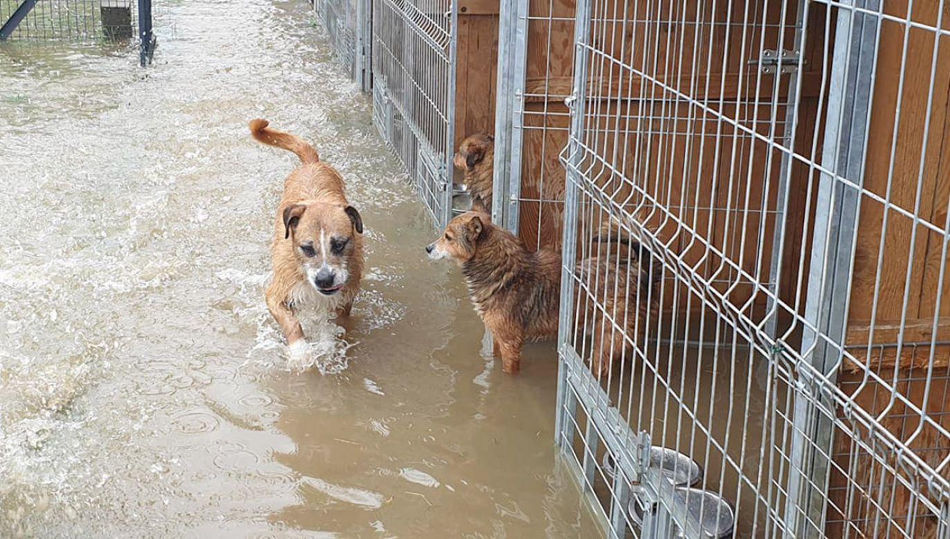 Woda przerwała wał i zalewa schronisko (fot. FB/Schronisko dla zwierząt ,,Czekadełko