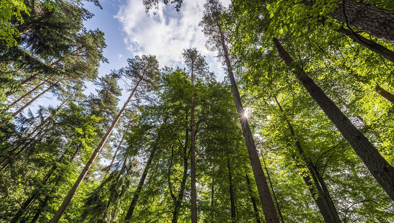 Minister środowiska polecił w ub. tygodniu Generalnemu Dyrektorowi Ochrony Środowiska wszczęcie w RDOŚ pilnej kontroli procesu wydania decyzji ws. budowy na terenie puszczy  (fot. Shutterstock/Cinematographer)