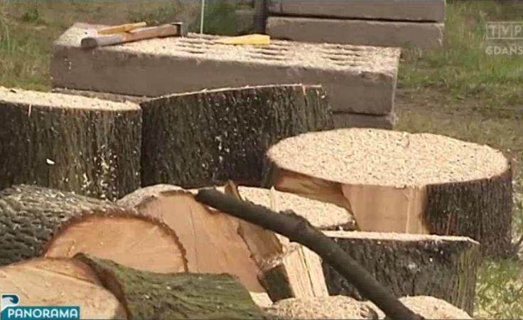 Mieszkańcy przeciwni wycince drzew w Gdyni