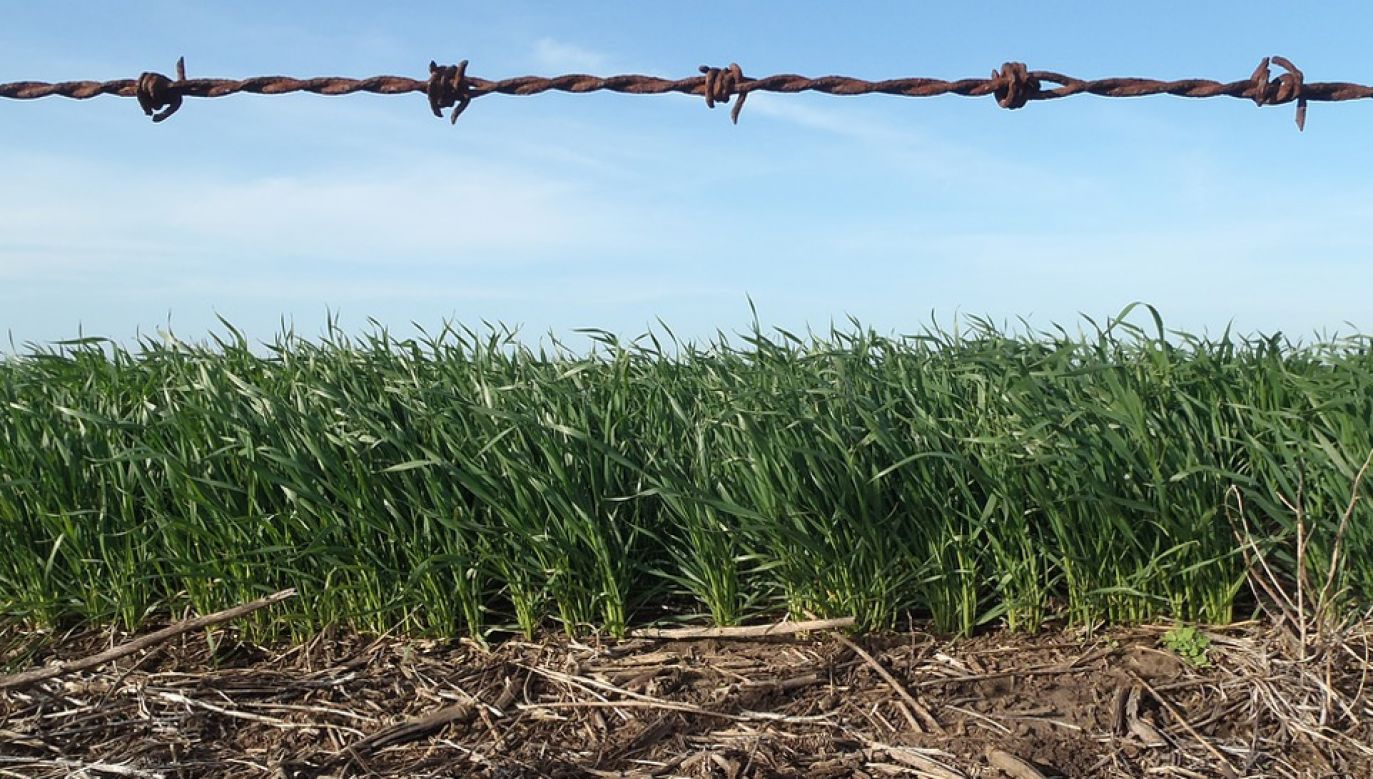 Rolnicy narzekają m.in. na korupcję (fot. Pixabay/augusbosch12)