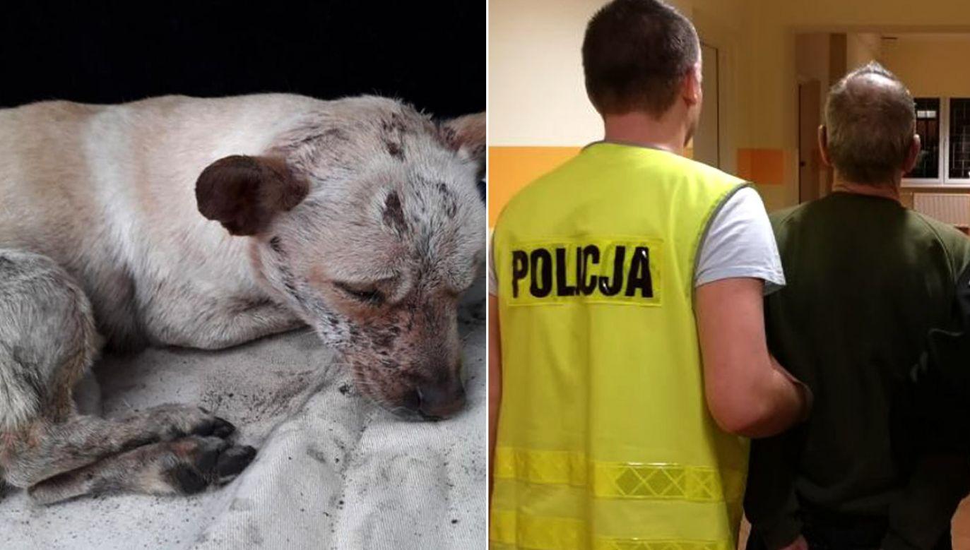 63-latek przyznał się do skatowania psa (Fot. Policja pomorska)
