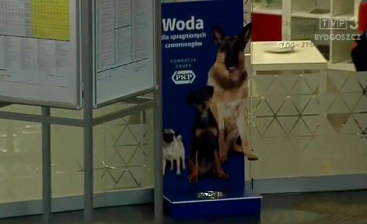 PKP stawia poidła dla psów na dworcach, m.in. w Bydgoszczy