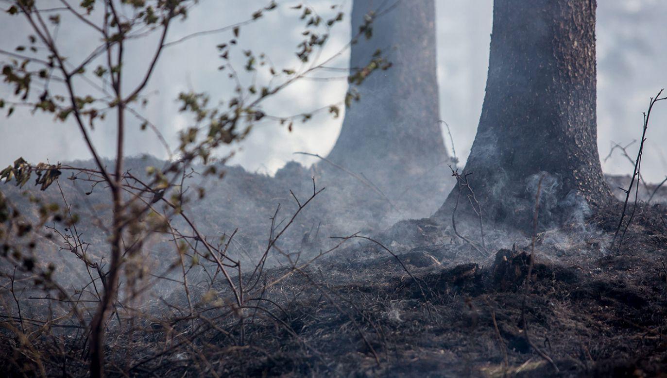 Od początku roku w polskich lasach doszło do 4000 pożarów (fot. arch. PAP/Maciej Kulczyński)