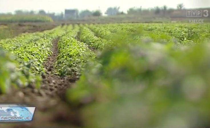 Uprawa ziół - przyszłością rolnictwa?