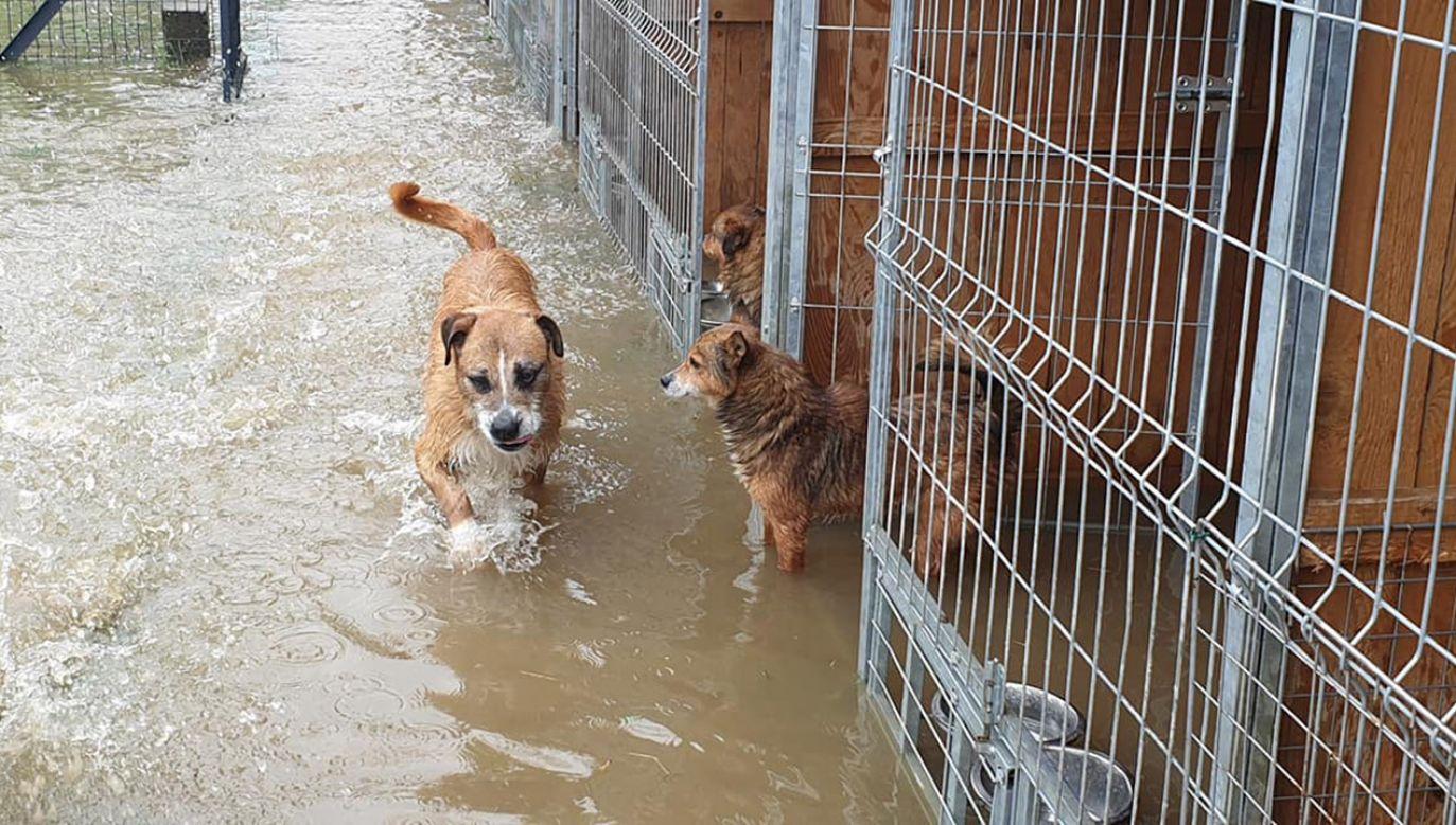 W Wadowicach Górnych woda przerwała wał przeciwpowodziowy i zalała schronisko (fot. FB/Schronisko dla zwierząt ,,Czekadełko