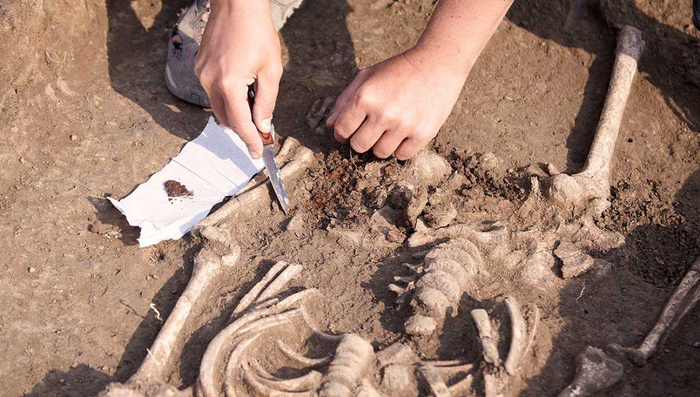 Według szacunków skamieniałości datowano na 50 tys.-67 tys. lat (fot. Shutterstock/Xolodan)